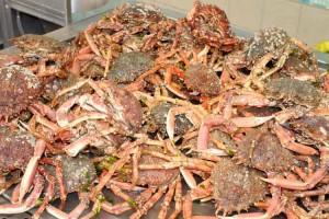 Spider crab anyone?