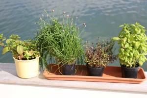 Play d'eau's garden of key herbs