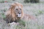Aslan rules over his Kingdom